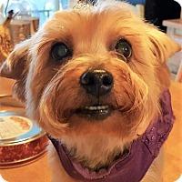 Adopt A Pet :: Princess - Pittsburg, CA