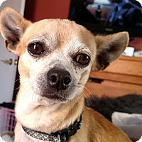 Adopt A Pet :: Leno - San Diego, CA