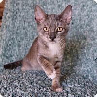 Adopt A Pet :: Oscar - Savannah, GA