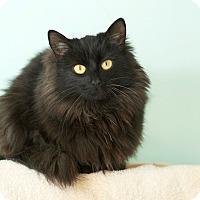 Adopt A Pet :: Allie - Coronado, CA