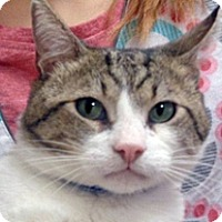 Adopt A Pet :: Dash - Wildomar, CA