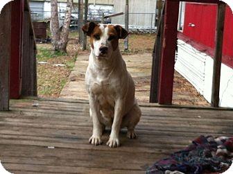 Hound (Unknown Type) Mix Dog for adoption in Byhalia, Mississippi - Paloma
