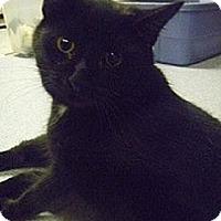 Adopt A Pet :: Bach - Hamburg, NY