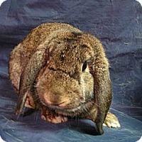 Adopt A Pet :: Sweeney - Newport, DE