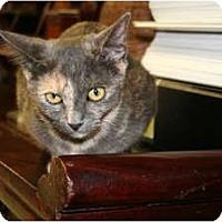 Adopt A Pet :: Leah - Bonita Springs, FL