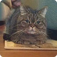 Adopt A Pet :: Broom Hilda - Davis, CA