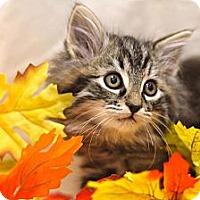 Adopt A Pet :: Romeo - Sacramento, CA
