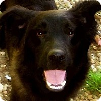 Adopt A Pet :: Reeses - Wakefield, RI