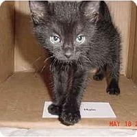 Adopt A Pet :: Carlo - Inverness, FL