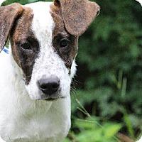 Adopt A Pet :: Dino Celebrate Home Dog! Lower Fee! - Locust Fork, AL