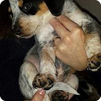 Adopt A Pet :: Baby Thelma - Marlton, NJ