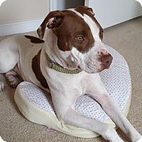 Adopt A Pet :: Lynn - Midlothian, VA