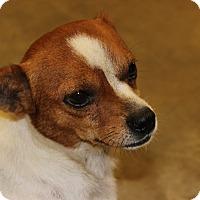 Adopt A Pet :: Pancho - Brattleboro, VT
