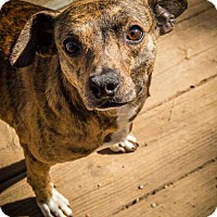 Adopt A Pet :: Bubba - Whites Creek, TN