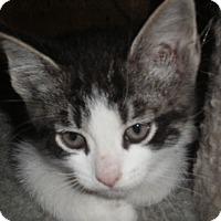 Adopt A Pet :: Nickie - Richmond, VA