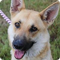 Adopt A Pet :: BLAIRE - Red Bluff, CA