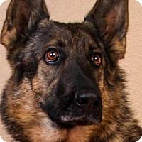 Adopt A Pet :: Jennifer - Colorado Springs, CO