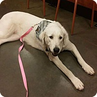 Adopt A Pet :: Ethyl - Ogden, UT