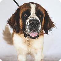 Adopt A Pet :: Cloey - Goodyear, AZ