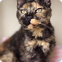 Adopt A Pet :: Apricat - Yukon, OK