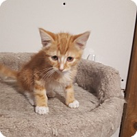 Adopt A Pet :: Hoover - Wichita, KS