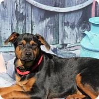 Adopt A Pet :: Jerry - East Dover, VT