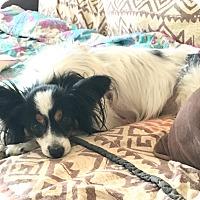 Adopt A Pet :: Kristen - Carlsbad, CA
