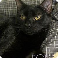 Adopt A Pet :: Noire - Gulfport, MS