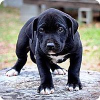 Adopt A Pet :: Eli - Plainfield, CT