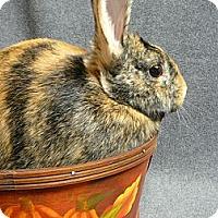 Adopt A Pet :: Callahan - Newport, DE