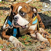 Adopt A Pet :: Bugz - New Orleans, LA