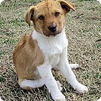 Adopt A Pet :: Jess - Waller, TX