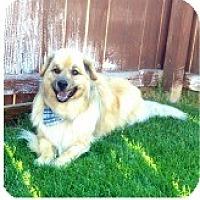 Adopt A Pet :: Roscoe - Evans, CO