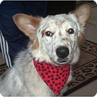Adopt A Pet :: Casper - Covington, KY