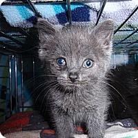 Adopt A Pet :: Pearl - East Brunswick, NJ