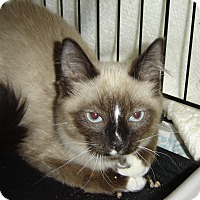 Adopt A Pet :: Fluffy - Grayslake, IL