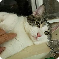 Adopt A Pet :: Griffen - Scottsdale, AZ