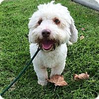 Adopt A Pet :: Orson - Mission Viejo, CA