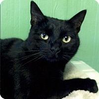 Adopt A Pet :: Kendall - Medway, MA