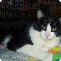 Adopt A Pet :: JILLIAN - Medford, WI