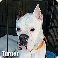 Adopt A Pet :: Turner - Encino, CA