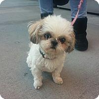 Adopt A Pet :: Paisley - Long Beach, NY