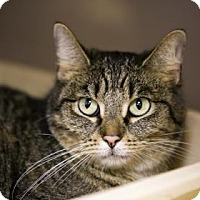 Adopt A Pet :: Rain - Kettering, OH