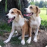 Adopt A Pet :: Brock - Avon, NY