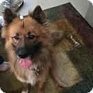 Adopt A Pet :: James