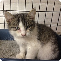 Adopt A Pet :: Tulsa - River Edge, NJ