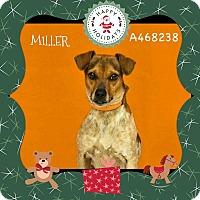 Adopt A Pet :: URGENT! Miller - Moreno Valley - San Bernardino, CA