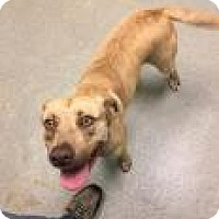 Adopt A Pet :: Lovely 6925 - Columbus, GA