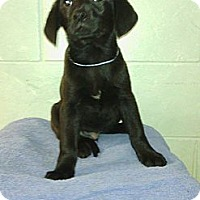 Adopt A Pet :: Ruger - River Falls, WI
