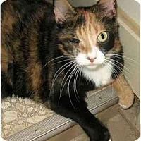 Adopt A Pet :: Maizey - Plainville, MA